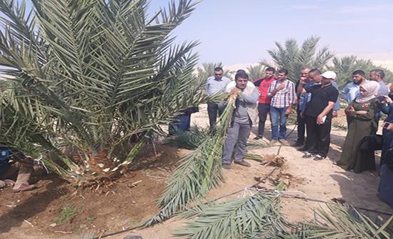 الوطني للبحوث الزراعية ينشر الممارسات الجيدة في إدارة بساتين النخيل