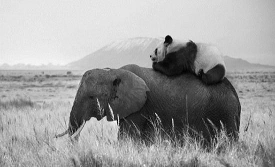 صور : الحياة السرية للحيوانات.. كما يتخيلها مصور فرنسي