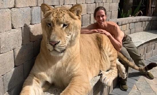 شاهد أضخم قط في العالم وزنه 319 كجم (فيديو)