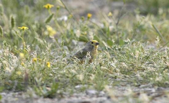 مختصون: محمية ضانا الوجهة الأكثر أمناً للطيور المهاجرة
