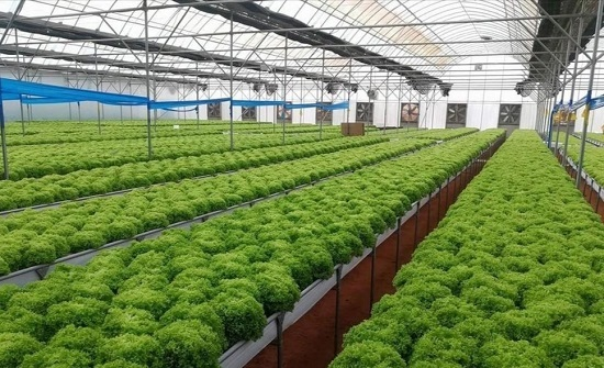 مزارعون يطالبون بتوفير التقنيات التكنولوجية الزراعية بأسعار تشجيعيّة