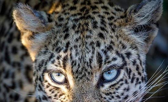 لمحبي الحيوانات .. شاهدوا صورا مختلفة ومنوعة