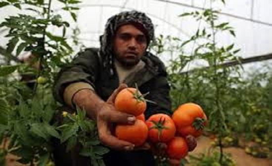 مزارعون فلسطينيون يتظاهرون للمطالبة بتصدير منتجاتهم خارج غزة