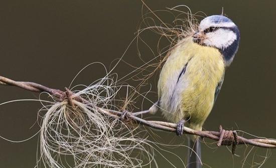 صور : جائزة الحياة البرية البريطانية