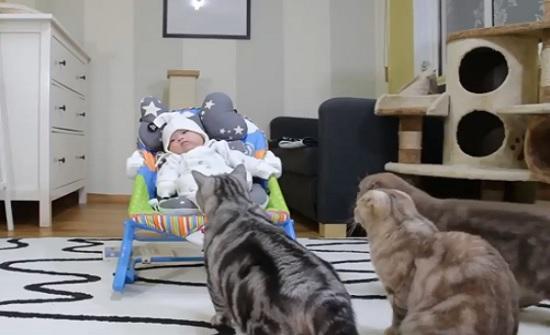 فيديو : قطط تشاهد طفل لأول مرة