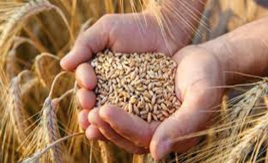 الزراعة تعلن آخر موعد لاستلام الحبوب