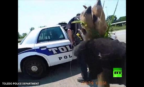 شاهد.. شرطة المرور في أوهايو تنقذ غزالا صغيرا