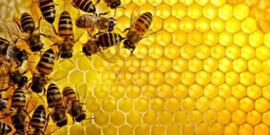 وزير الزراعة يؤكد أهمية دعم قطاع النحل