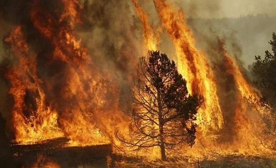 روسيا: مساحة حرائق الغابات تسجل رقما قياسيا منذ بداية القرن