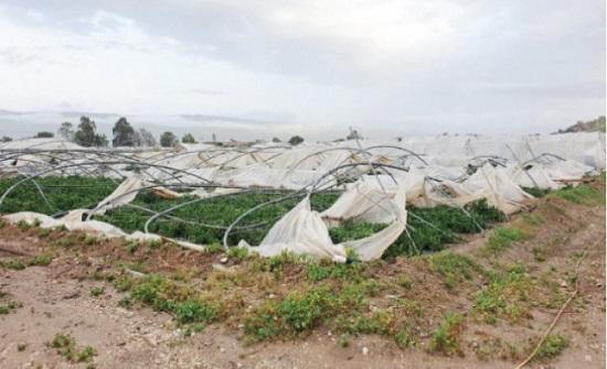 وادي الأردن: قروض بدون فوائد للمزارعين المتضررين من الرياح