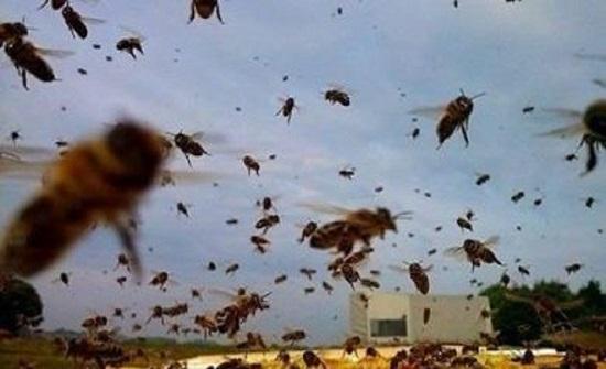 ينشتر في بريطانيا...ظهور وباء فيروسي قاتل في أسراب النحل