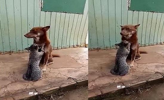 بالفيديو.. مشهد رومانسي بين كلب «لابرادور» وقطة تقوم بعمل مساج له