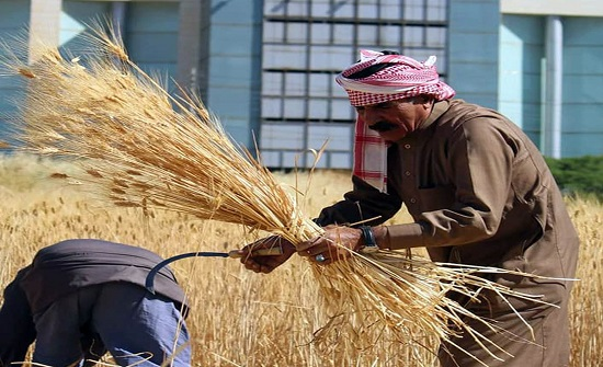 أردنيون يعودون لمنجل قمحهم لاستغلال المساحات بالزراعة