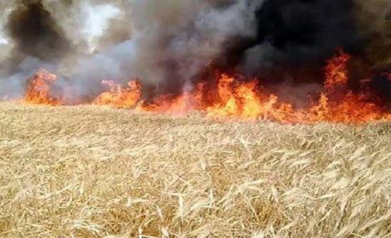 البحوث الزراعية يدعو للتباعد بين المحاصيل تفاديا لانتشار الحرائق