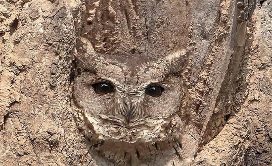 بالصور : فن النحت على الشجر