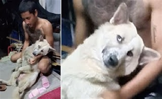 كلب يتظاهر بالموت ليتجنب الاستحمام في مشهد طريف (فيديو)