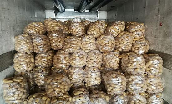 الزراعة: لا وجود لبطاطا مستوردة في السوق المحلية