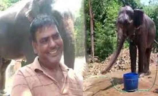 الهند : يحرم زوجته وأطفاله.. ويسجل تركته لفيلين