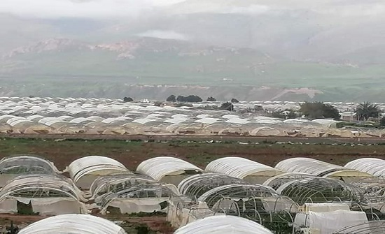 مزارعو وادي الاردن يطالبون برفع القيم التقديرية للإضرار التي لحقت بمزارعهم