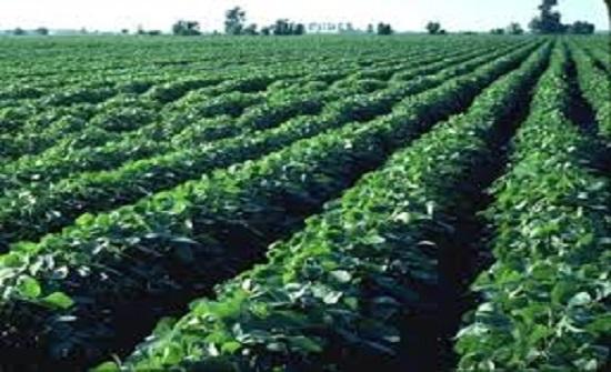 فاعليات تطالب بضرورة بناء منصة بيانات الكترونية للقطاع الزراعي