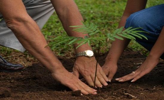 زراعة جرش تبدأ بتوزيع الغراس الحرجية مجانا