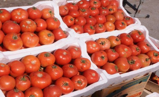 1ر5 % ارتفاع أسعار المنتجين الزراعيين