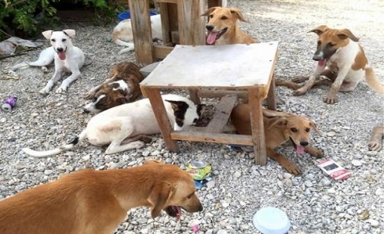 (الإدارة المحلية) تمنع مكافحة الكلاب الضالة
