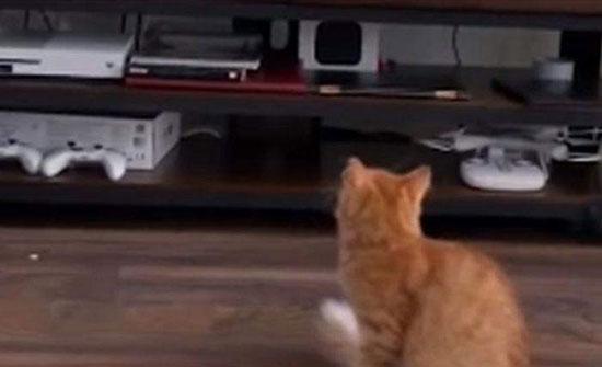فيديو : رد فعل صادم لقطة رأت قطا ضخما في التليفزيون