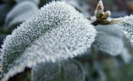 اشتداد واضح على البرودة خلال الليالي القادمة خاصة ليلة الخميس/الجمعة