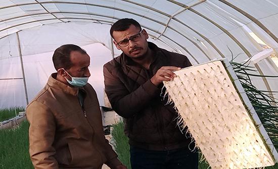 المفرق: مهندس يستبدل التربة بأحواض مائية لزراعة البصل الأخضر