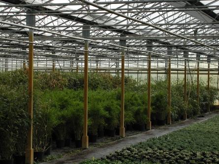 Bambusinsel Gartengestaltung Schlautkötter Köln Gartenbaubetriebe