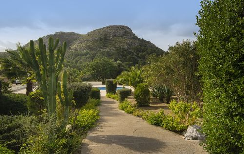 FINCA-GUESTHOUSE-AND-HORSESTABELS-ALCUDIA_14.jpg