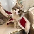 Кошка Мур