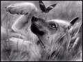 Волчина