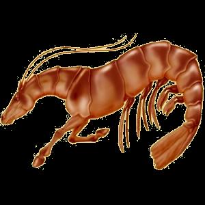Верховая лошадь Арабская Чистокровная Светло-серый