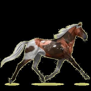Верховая лошадь Орловский рысак Красно-гнедая