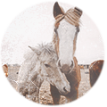 Аttraction light