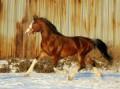 Лошади столетия
