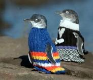 Penguin Crü