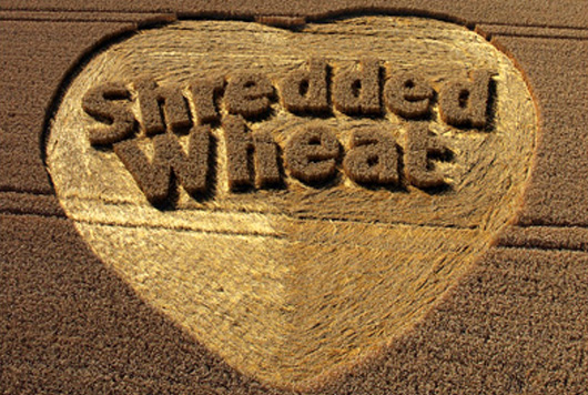 shredded wheat crop