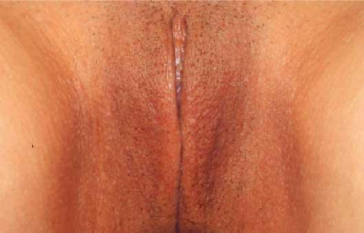 playboy vagina