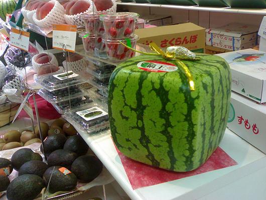 melon giftwrap