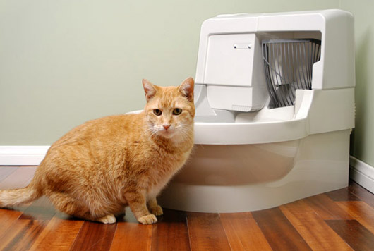 Cat Genie Self-Cleaning Litter Box