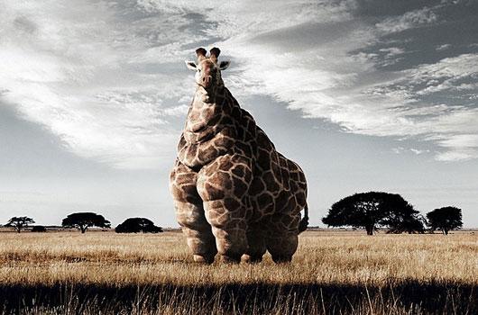 giraffe_amerika.jpg