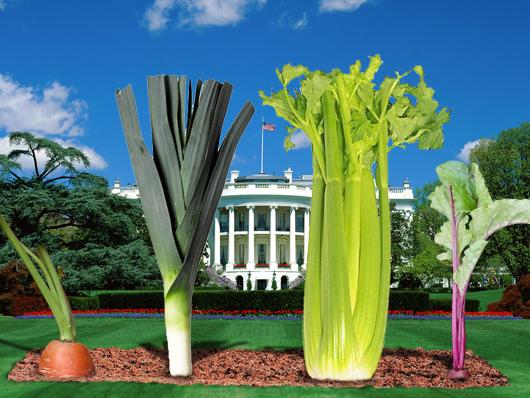 presidential vegetables