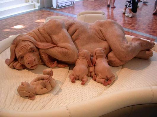 Human animal hybrid