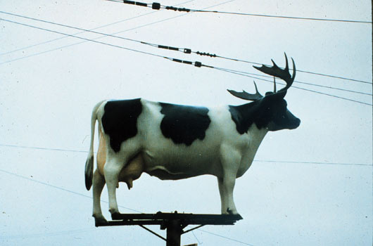 cow on a pole