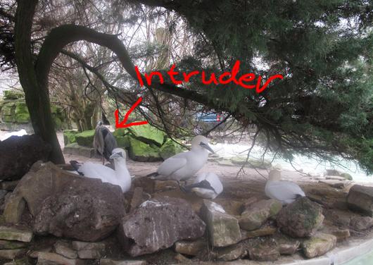intruder_1_530.jpg