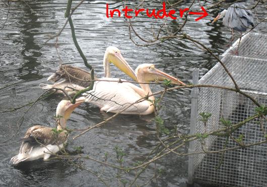 intruder_4_530.jpg