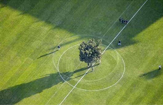 soccer tree 04